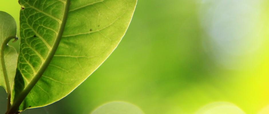 leaf_2 copy